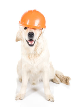 Dog with workmans hat on